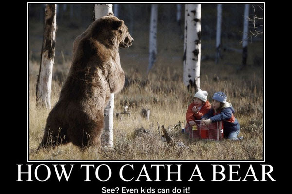 Funny Bear Quotes Funny Cat Pictures