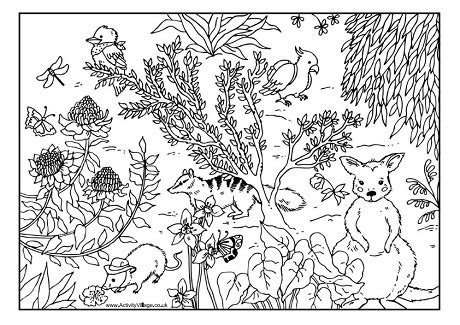 australian animals coloring page  kids