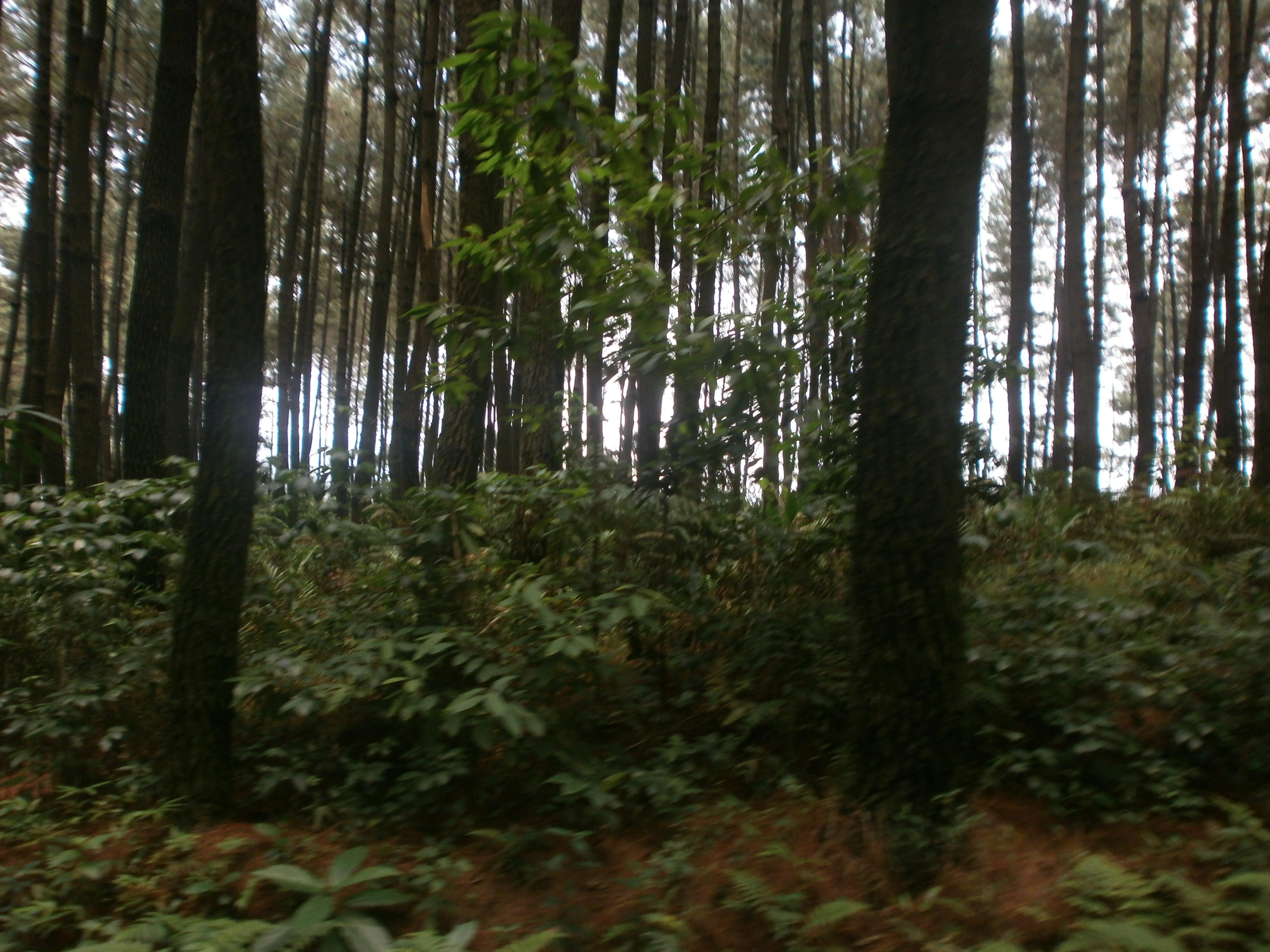 Foto Pemandangan Dalam Hutan Brad Erva Doce Info
