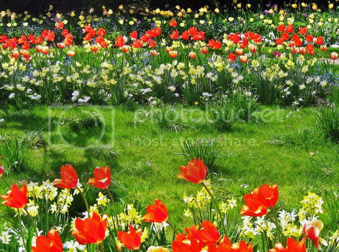 Outstanding Flower Garden Photos