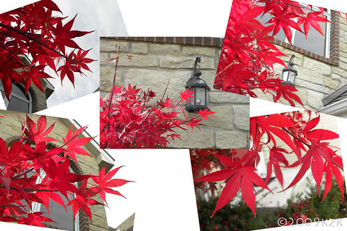 JapaneseMapleLeafCollage