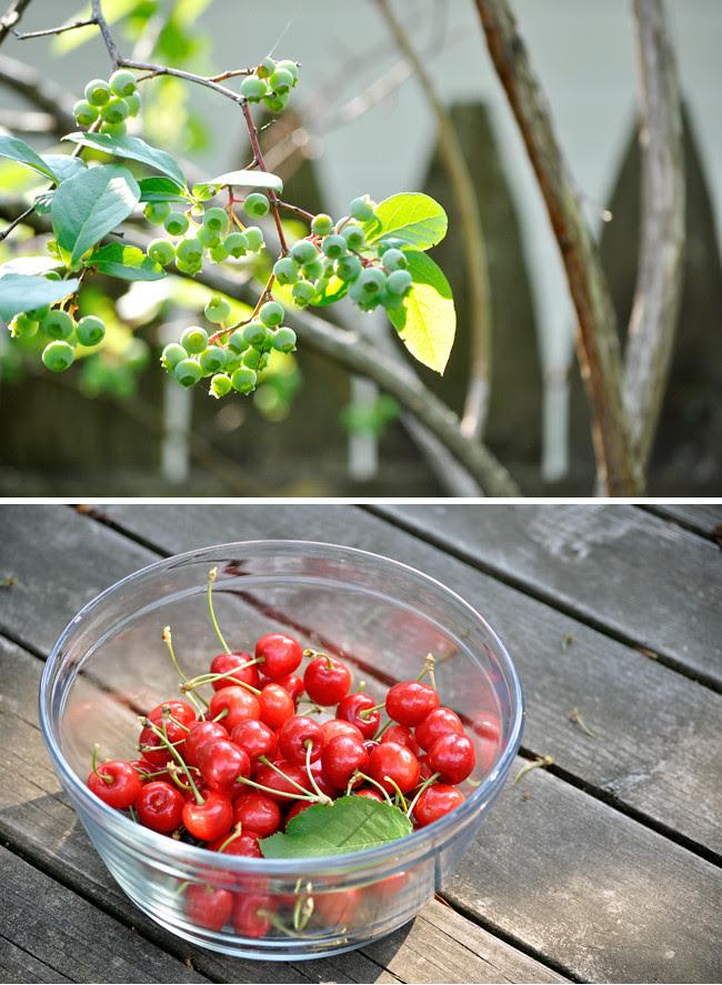 pickingfruits