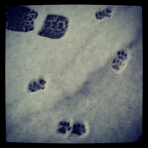Found these itty bitty #pawprints in the driveway this morning... Kitty? #cute