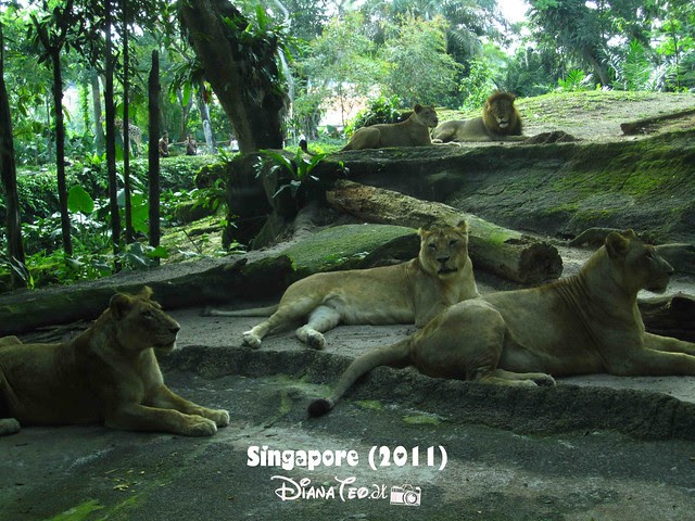 Day 3 Singapore - Zoo Singapore 19