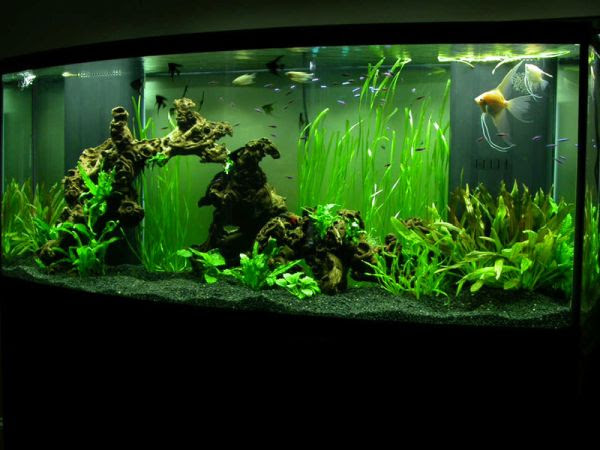 Beautiful underwater vegetation gives this modern aquarium a ...