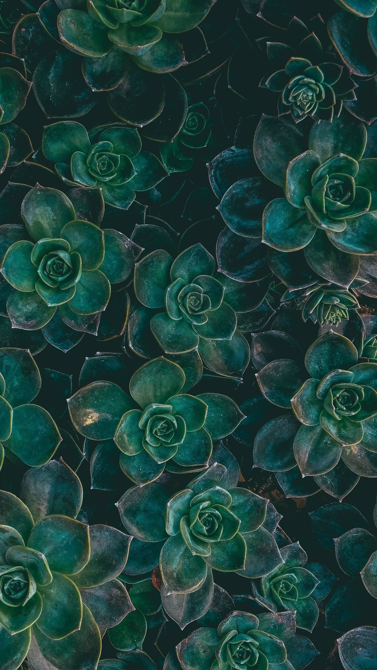 Succulent Wallpapers 51+ images