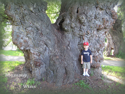 tree_will2