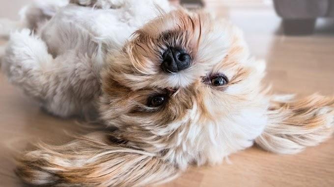 Esta es la mejor zona de casa para que los perros coman y duerman