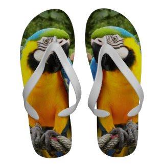 Exotic Macaw ParrotFlip Flops