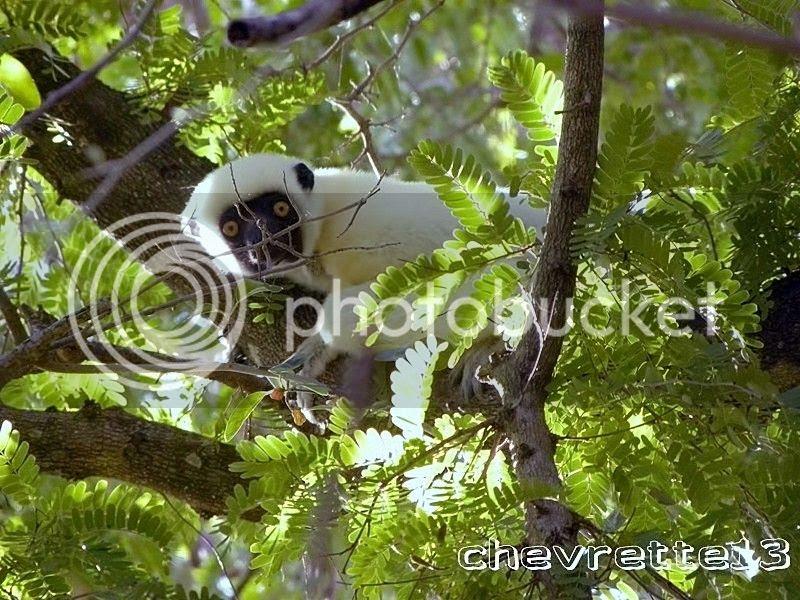 http://i1252.photobucket.com/albums/hh578/chevrette13/Madagascar/DSCN2222Copier_zpsf49d01e6.jpg