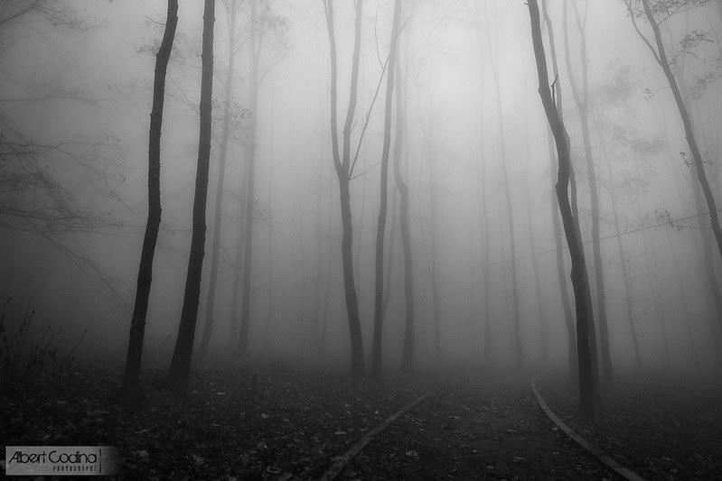 Camí en la Boira | Path in the Fog