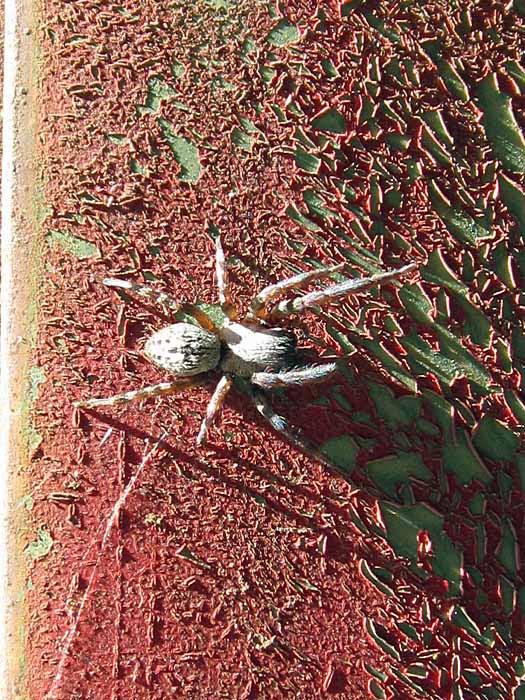 Shop Spider