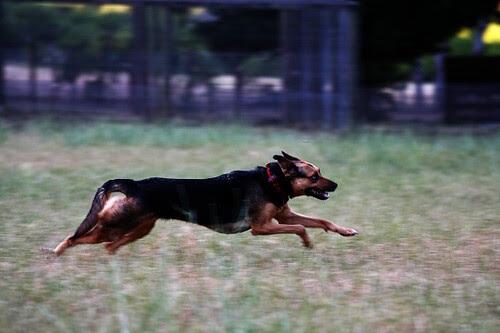 Celeste running