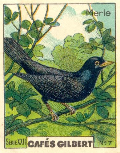 gilbert oiseau 6