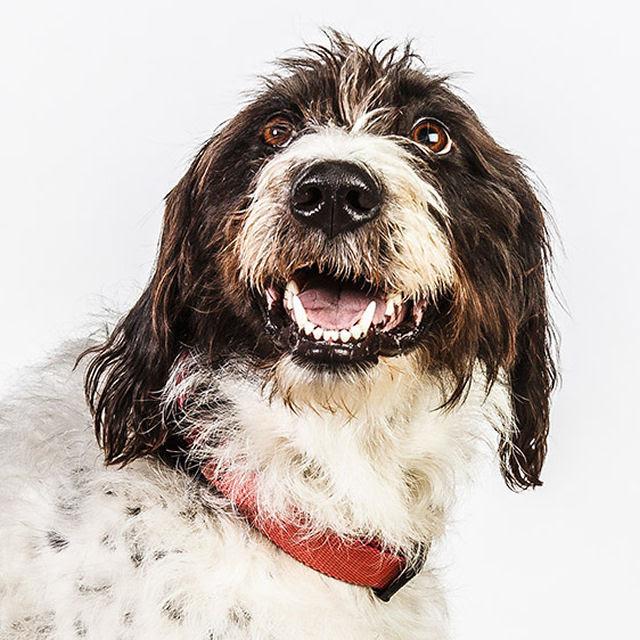 Retratos de cães cheios de personalidade 11