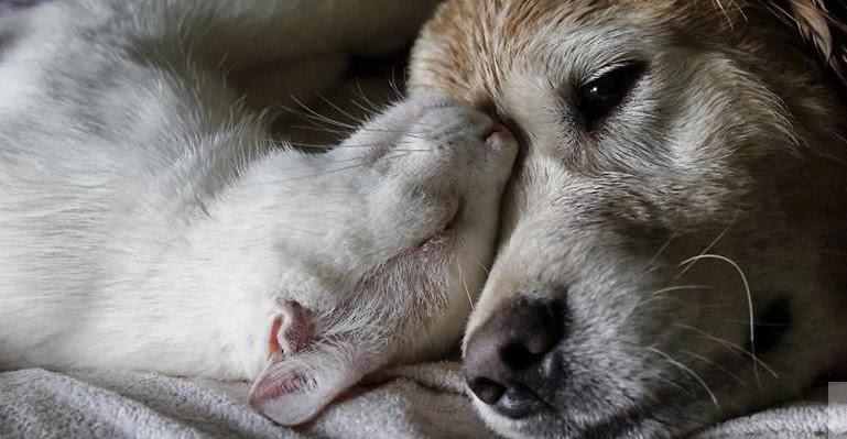Resultado de imagen de perros y gatos geriátricos