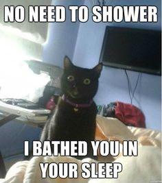 Crazy Cat Stuff