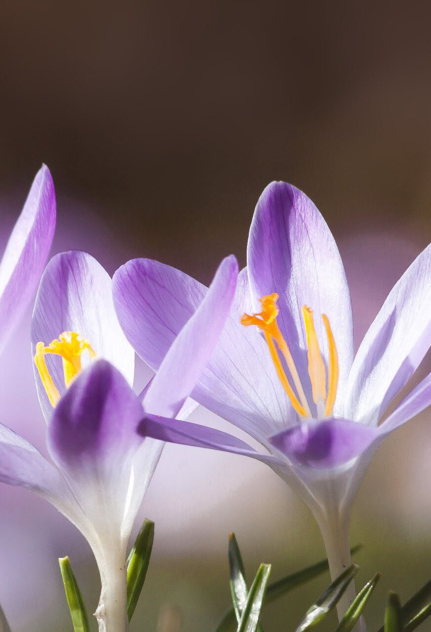 Spring flower image, 35 best flower photos