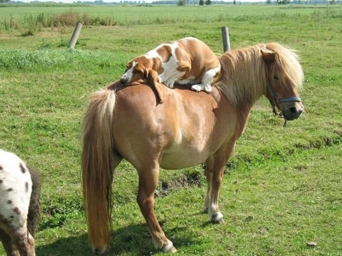 Hitchin' a ride…