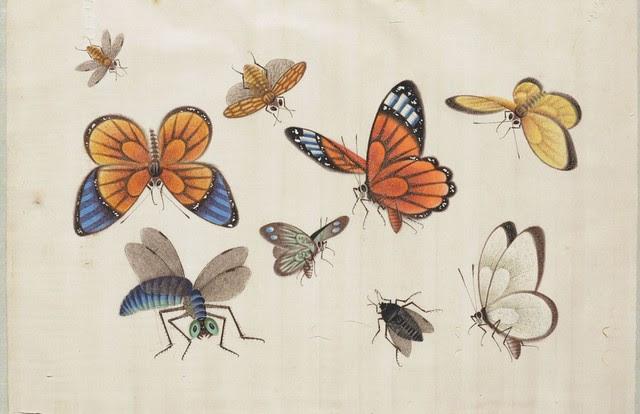 Butterfly Album i