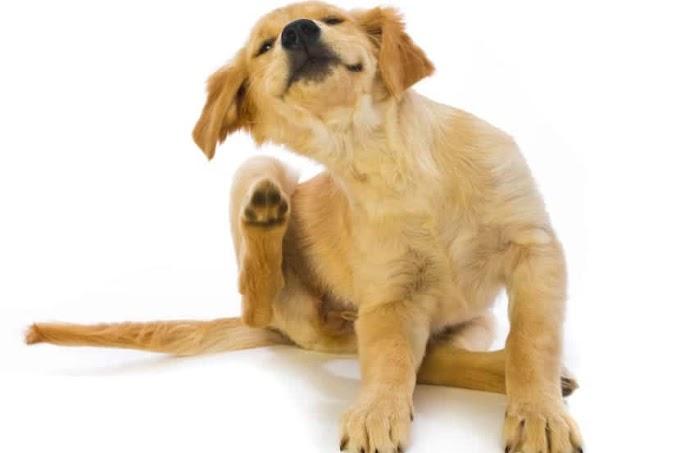 Todo sobre las garrapatas en perros