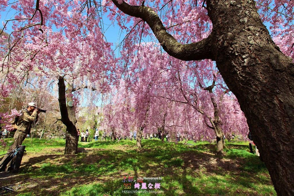 2013-04-05-13h18m46IMG_5076