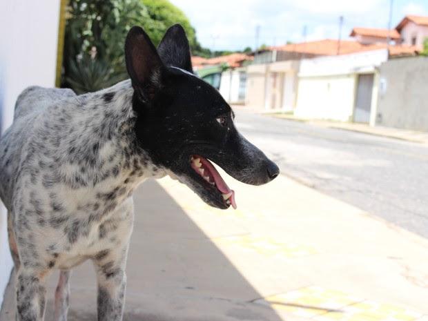 Bidu foi abandonado pelos últimos donos e aguarda uma nova família (Foto: Fernando Brito/G1)