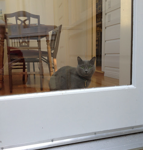Morty looks out back door.jpg