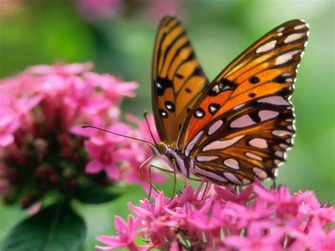 butterfly desktop wallpapers amazing picture collection