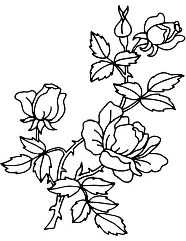 Rosa Da Colorare E Stampare