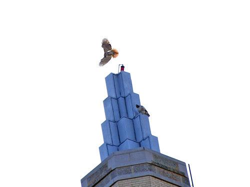 Eldorado Hawks