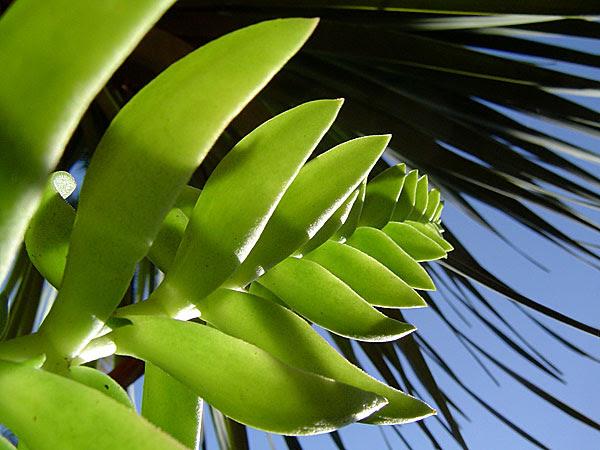 plants in the brisbane city botanic gardens
