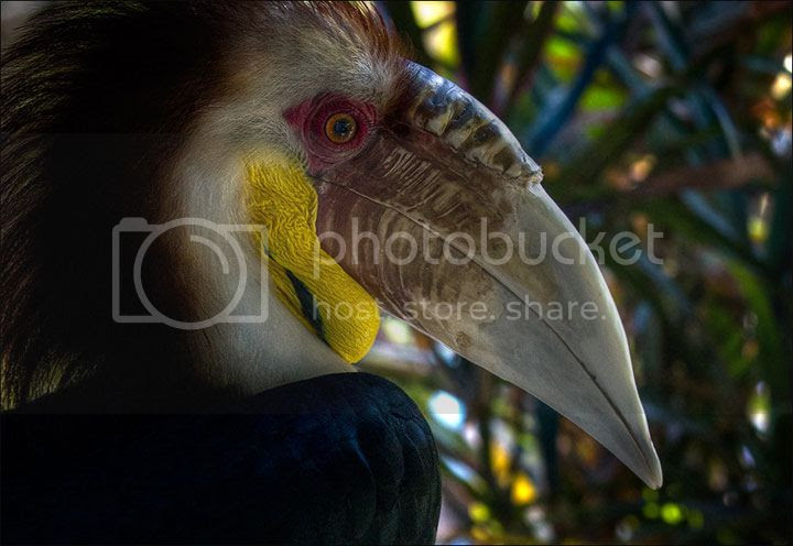 photo Sergei-Balanov-5_zps3c68036d.jpg