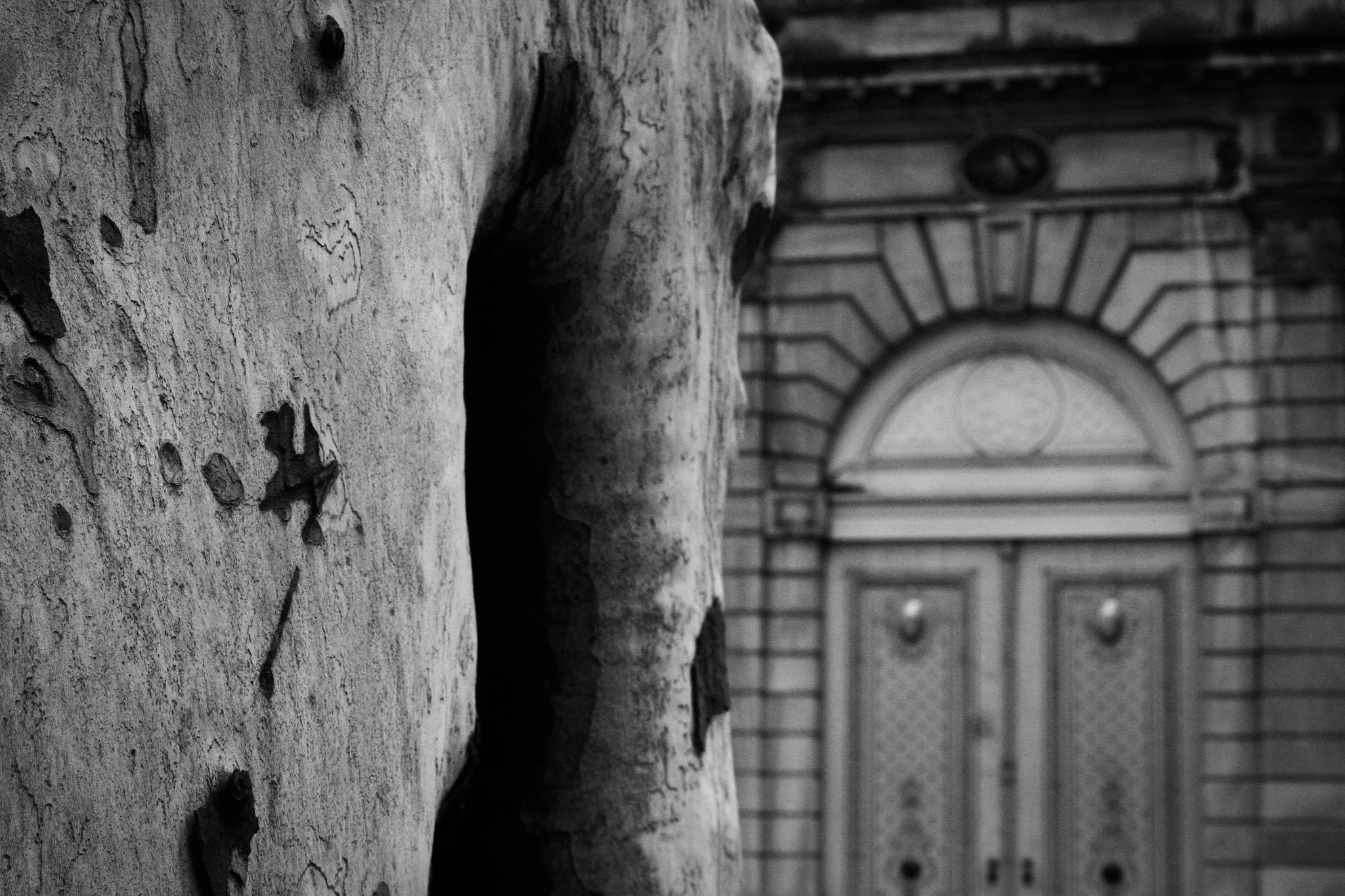 A plane tree and a doorway.
