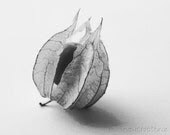 Gooseberry black and white PRINTABLE photography, home decor 8x10 10x10 16x20 11x14 20x30, yellow, gold, fruit food art, kitchen wall art - NewCreatioNZ