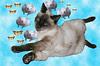 Interpretando sonhos com gatos!