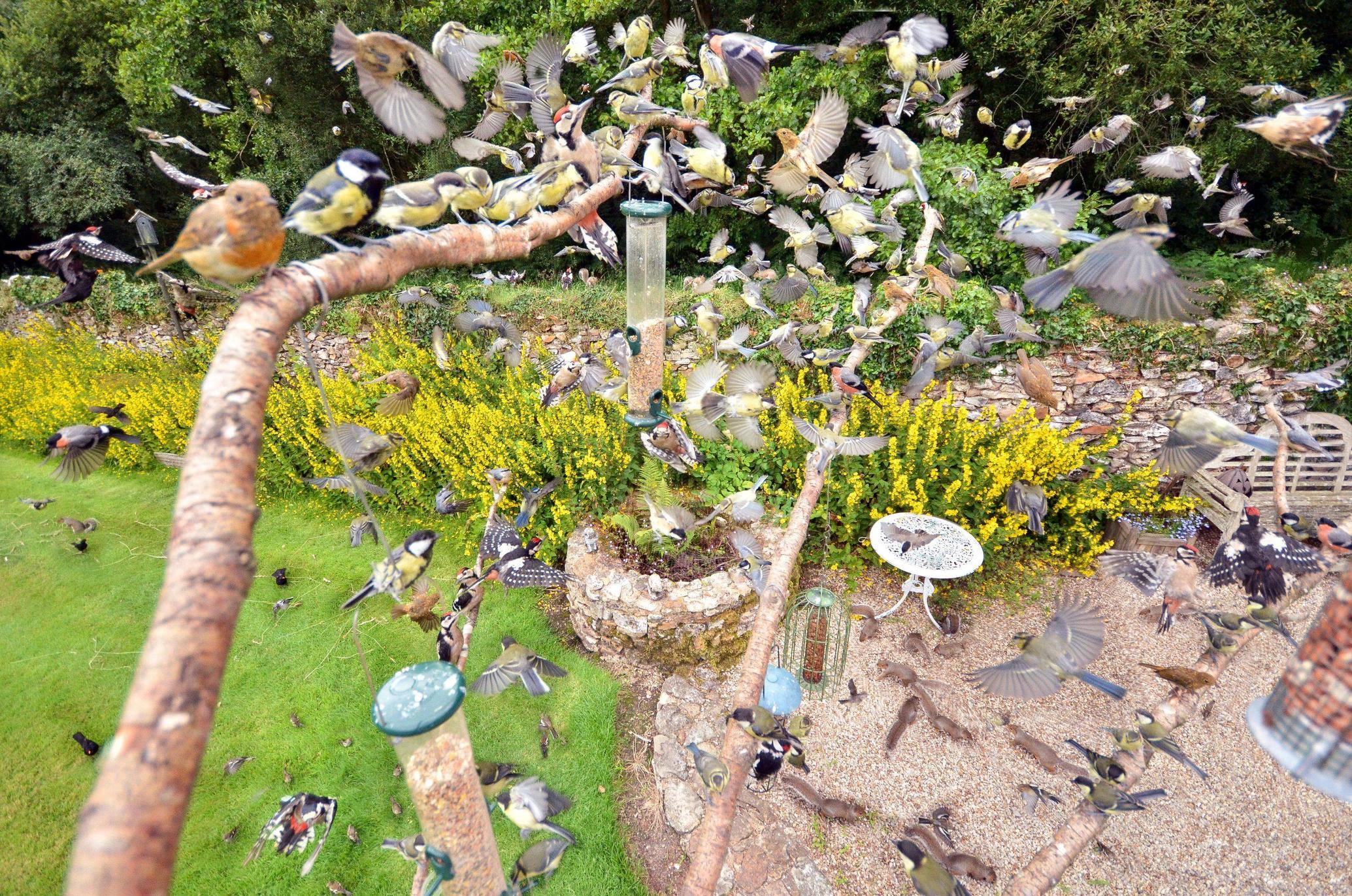backyard birdfeeder