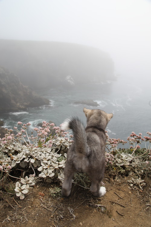 tastier:    What do you see? Do you want to jump into the water? Do you want to know what's on the other side? We are all curious about the unknown. We all want what we can't have or reach. Why should a dog be any different?