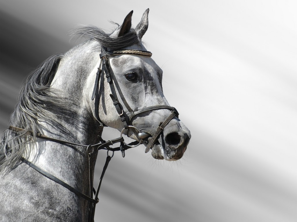 Behold The Pale Horse: The Genetics of Color and Cancer ...