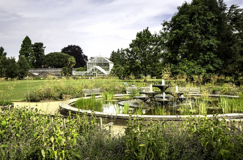perierga.gr - Οι βοτανικοί κήποι μπορεί να σώσουν τα απειλούμενα φυτά και ίσως εμάς!
