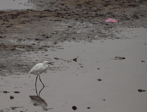 Pássaro no pântano by MauFeitio