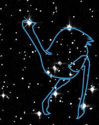 Orion as emu (Source: NASA/ABC Science Online)