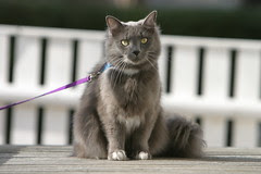 Cat on a leash?! It's Max.
