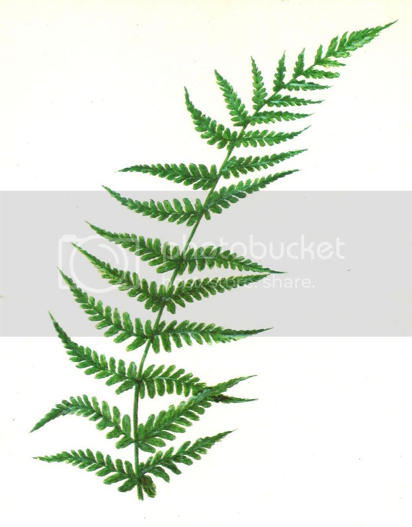 vintage retro flashcard fern graphic photo vintageflashcardfern_zps8cf831e5.jpg