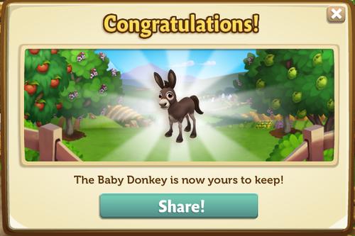 Donkey9