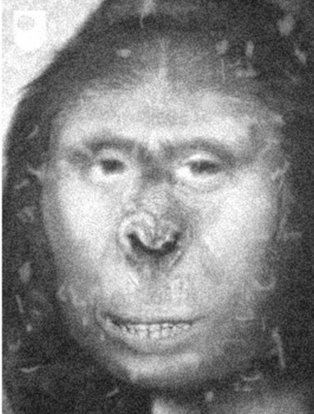Historic: A leading genetecist claims a towering woman named Zana (artist's representation) who lived in 19th Century Russia - and appeared to be 'half human, half ape' - could have been the fabled yeti