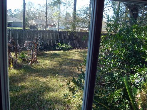 View into the Half-Dead Yard