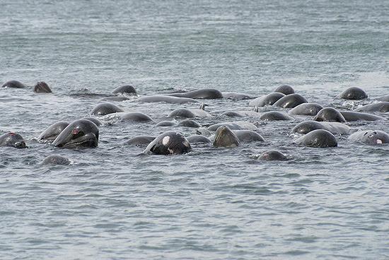 Baleias que se aproximam do litoral da Escócia começaram a ser avistadas desde a tarde de quinta-feira