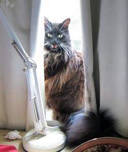panting-cat1