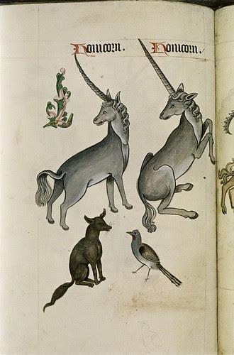 Unicorns. Fox. Bird